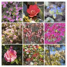 Silver Anniversary Garden - Candie Gardens